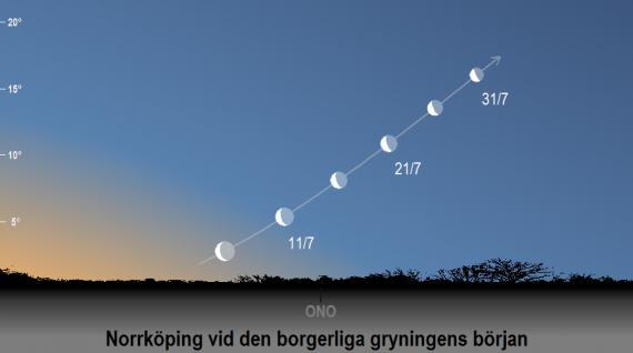 Venus position och dess faser på himlen vid den borgerliga gryningens början i juli 2020 (sedd från Norrköpings breddgrad 58,6°n)